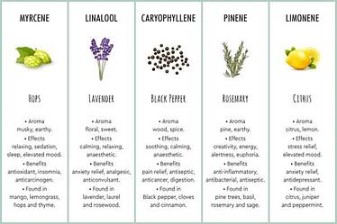 Terpenes infographic