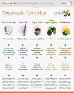 Examples of terpenes image